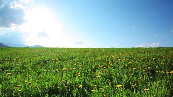 Karpatské zelené pole