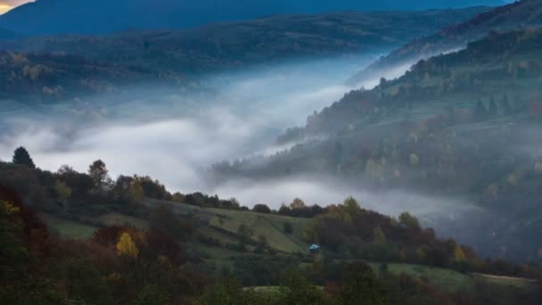 carpathian forest with cloudy sky