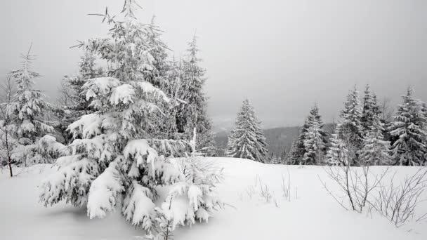 Karpatenwald mit Schnee bedeckt