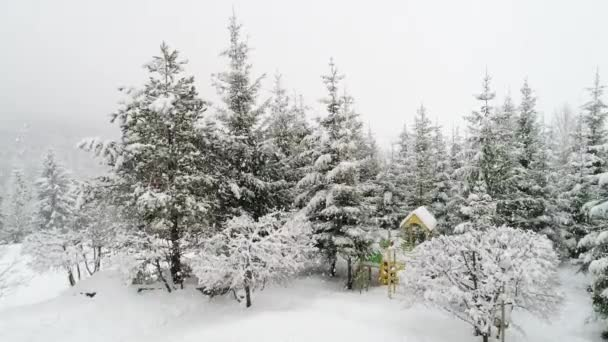 Zimní Karpatská krajina, vánoční stromky ve sněhu.