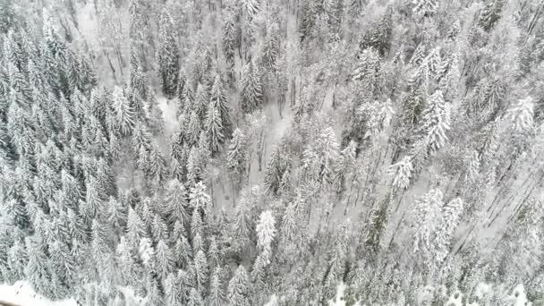 Tél Carpatians természet, légi kilátás valós idejű havazás, Uhd 4k