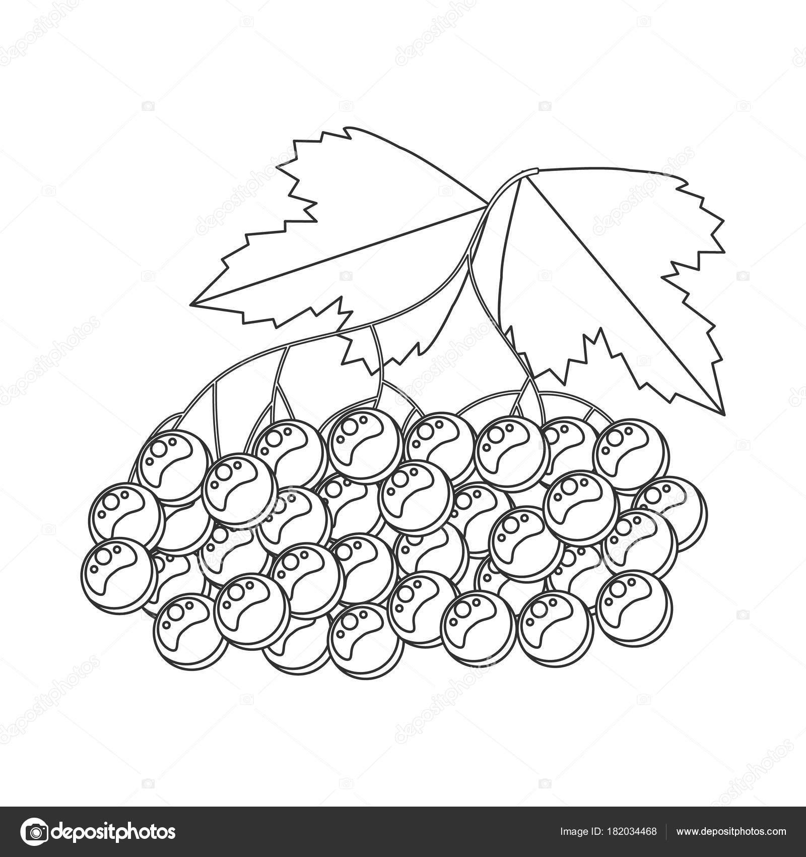 Libro de colorear para los niños. Ilustración de vector. Viburnum ...
