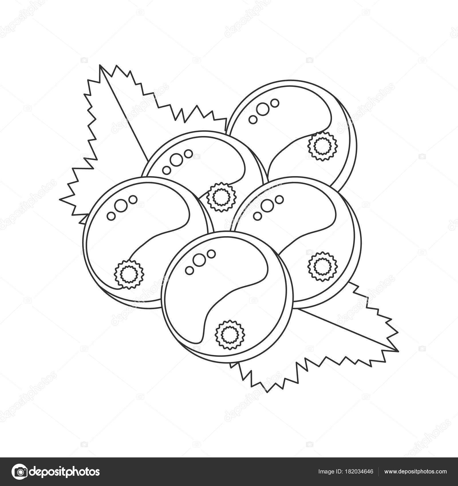 çocuklar Için Boyama Kitabı Vektör çizim Frenk üzümü Le Ile Stok