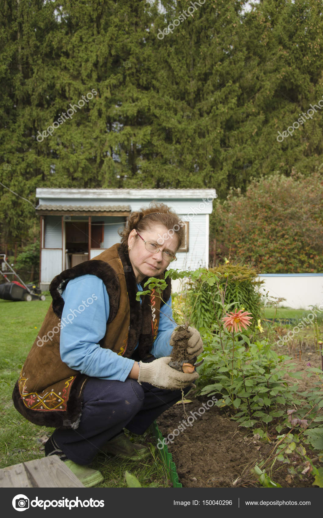 Woman Planting Flowers Flower Bed Front Small House Stock Photo