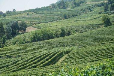 Vineyards near the village of La Morra, Piedmont - Italy