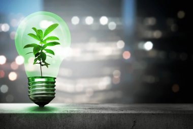 Green plant inside light bulb