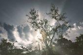 Pohled na stromy v slunci