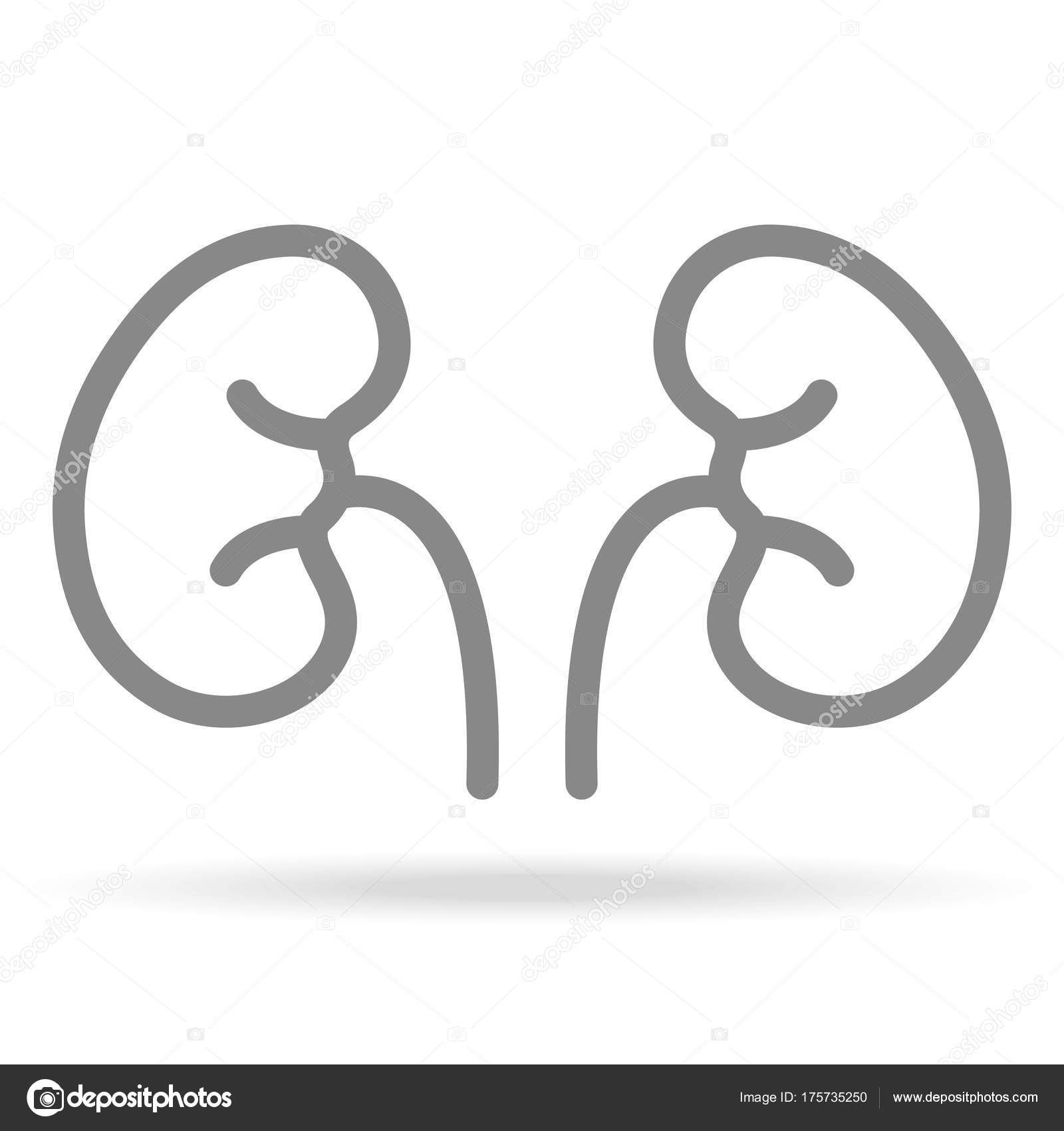 Human Kidneys Nephrology Icon In Trendy Thin Line Style Isolated On