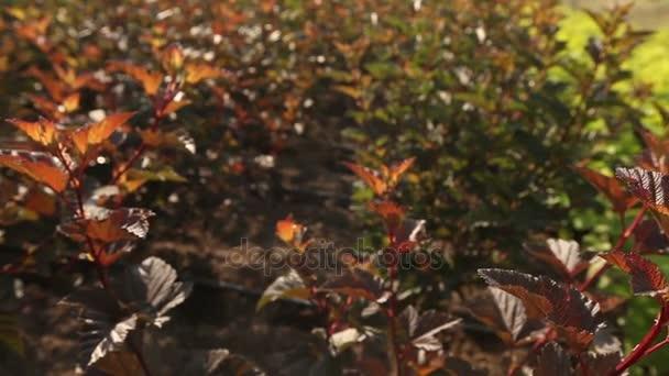 Pěstování rostlin panorama, obecný plán, zahradní centrum, zalévání rostlin, pěstování sazenic