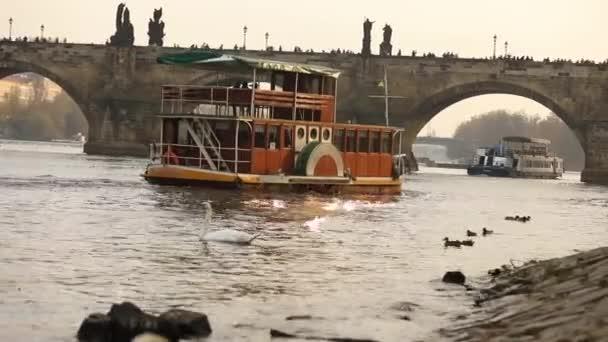 Labutě na Vltavě, labutě v Praze, vyhlídková loď pluje na řece Vltavě, pohled na starý Karlův most v Praze, 17. října 2017