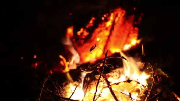 Big night bonfire burns in a clearing in the forest, fire burn ends