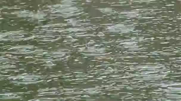 torrential downpour weather