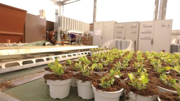Rostliny v květináčích na dopravníku, pohybující se rostliny v květináčích na chodníku. Moderní rostlinné rostliny, robotický skleník
