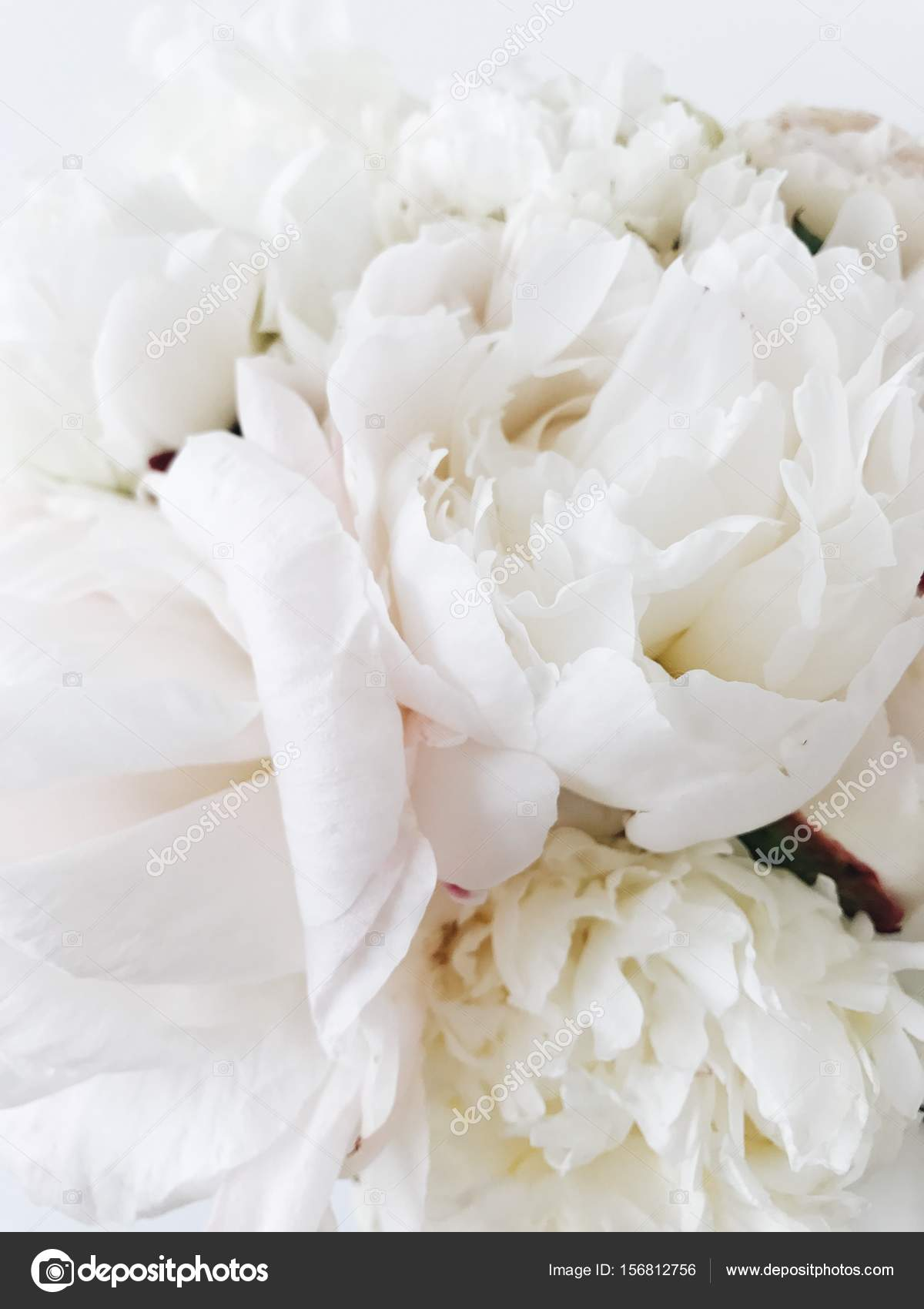 White Peonies Bouquet Stock Photo C Asmart 156812756