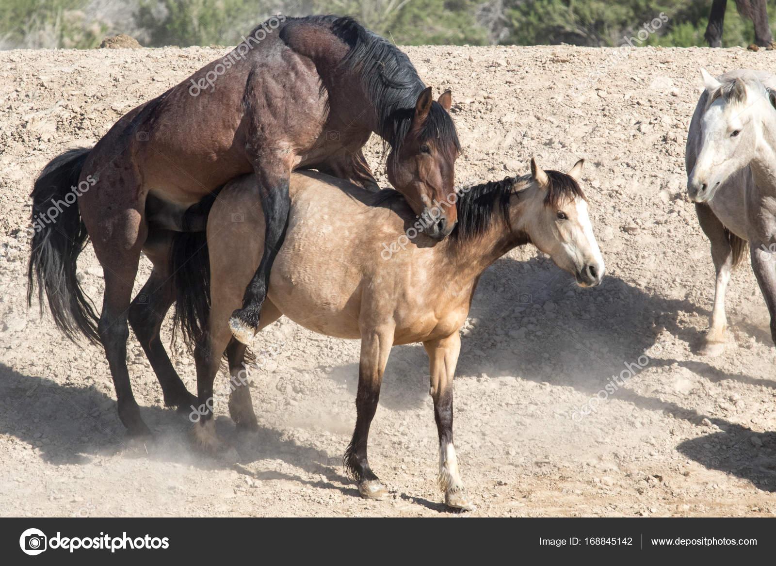 Wild horses mating — Stock Photo © wes242 #168845142