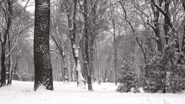 Falling snow in a winter park in slow motion