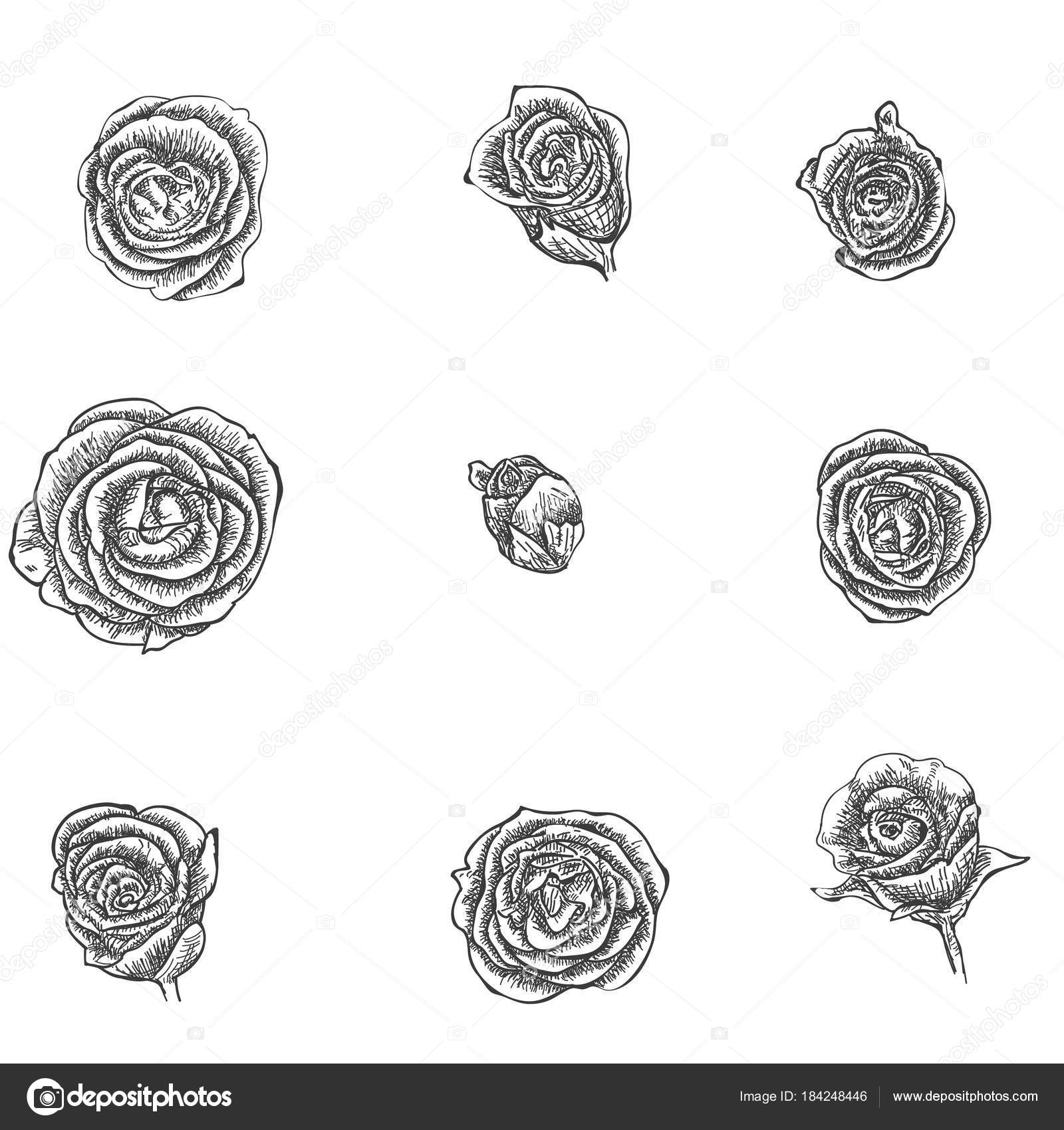 flowers set hand drawn rose vector stock vector annamaglyak