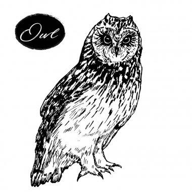 Owl hand drawn vector graphics
