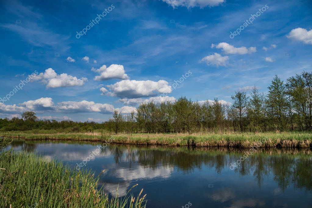 landscape river and green trees