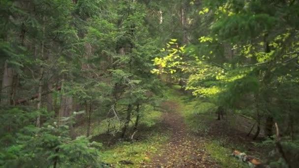 Po procházce po tajemné cestě zpomaleně krásný zelený Les