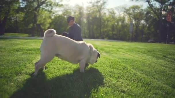 Krásná dívka si hraje s šťastný pes plemene Mops park letní slunce zpomalený
