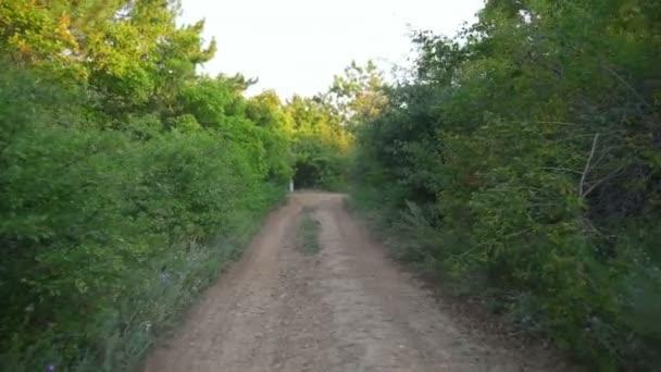 Prázdné lesní silnice stromy přírody slunce rychlé Zpomalený pohyb