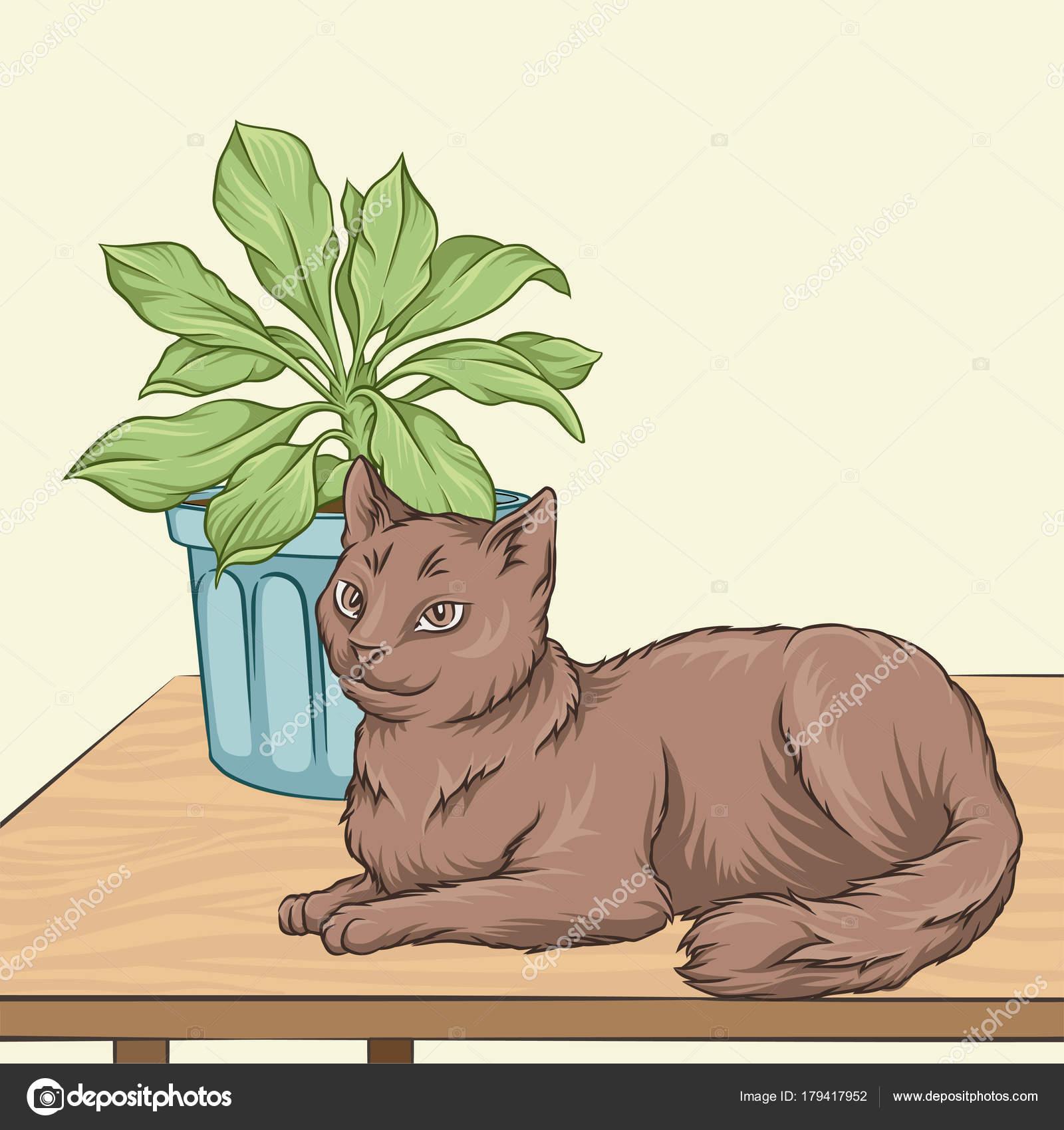 Süße braune Katze Haustier Tier liegen auf einem Holztisch, Raum ...