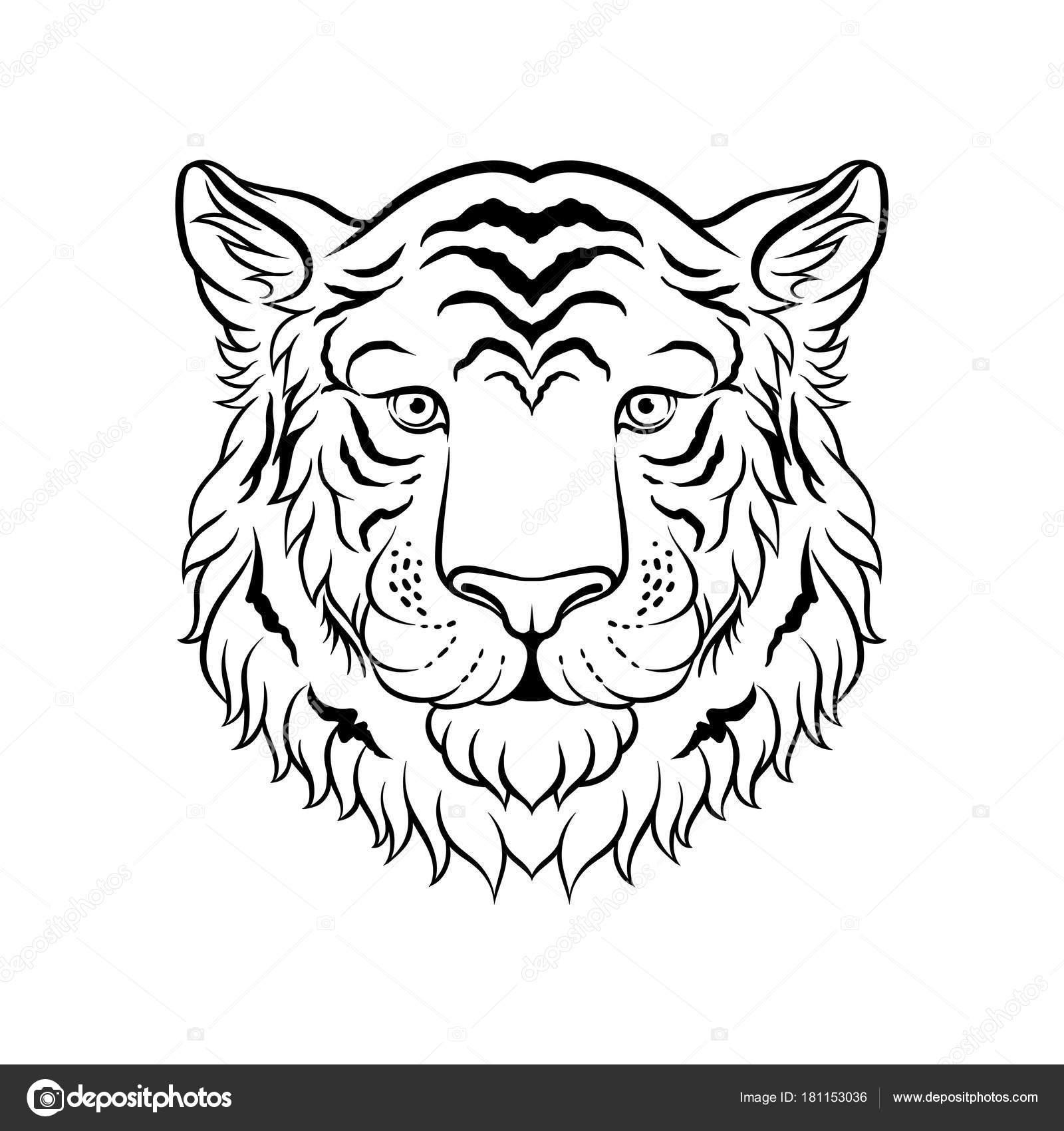 Imágenes Caras De Tigres Para Dibujar Blanco Y Negro Dibujo De