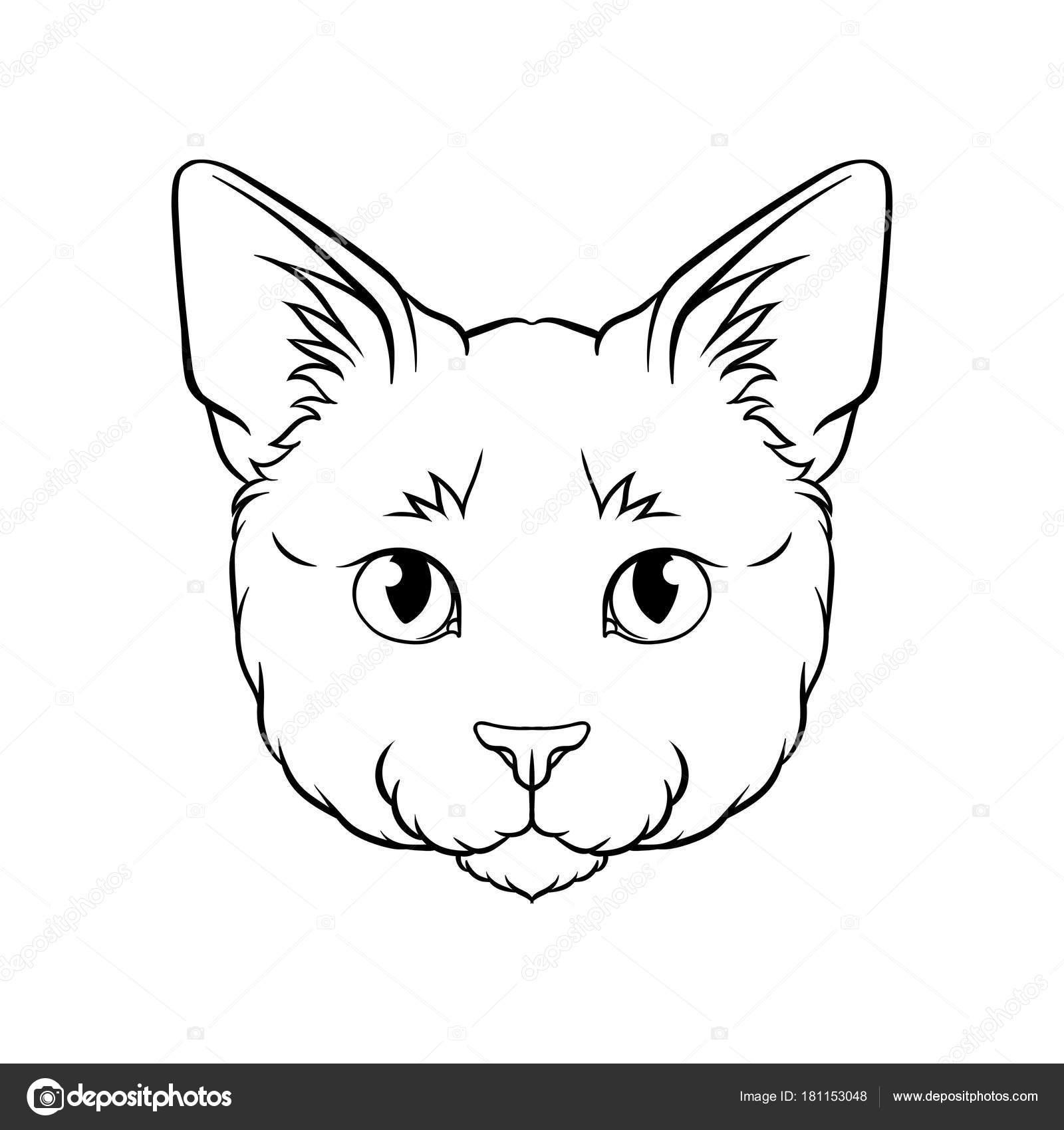 preto e branco desenho de cabeça de gatos rosto do vetor desenhado
