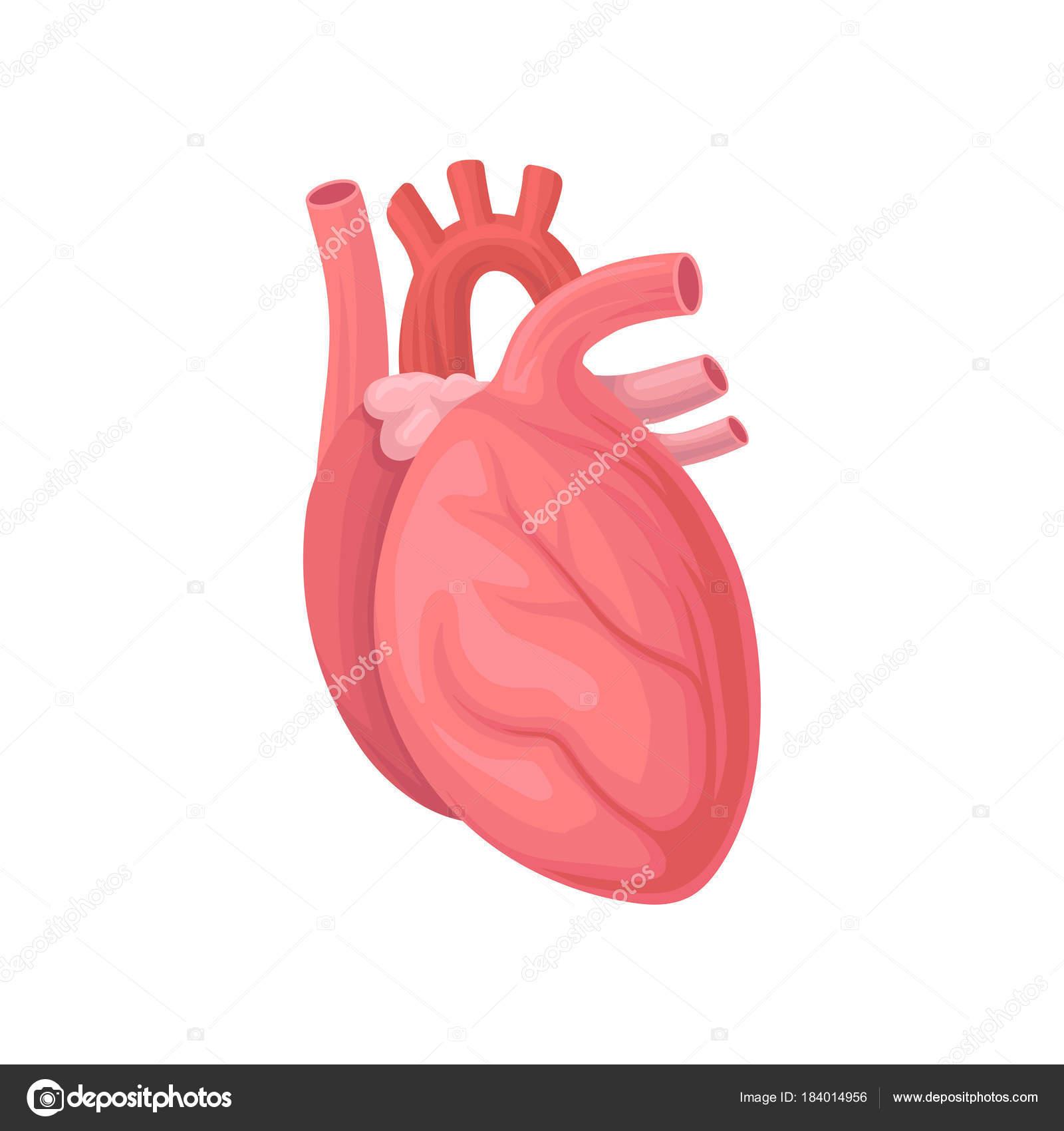 Comic-Illustration des menschlichen Herzens. Zentrales Organ des ...