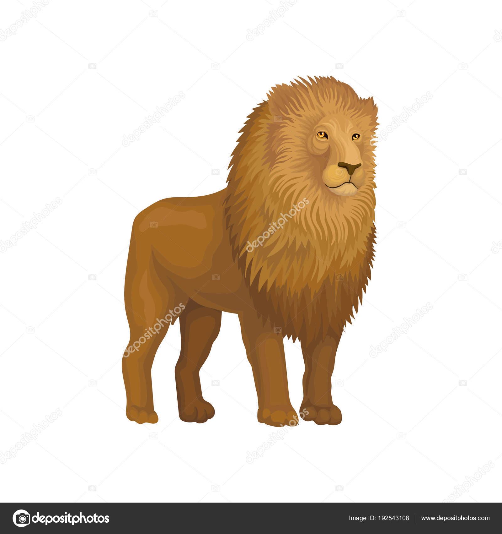 ライオン野生アフリカ動物のベクトル イラスト白背景に — ストック