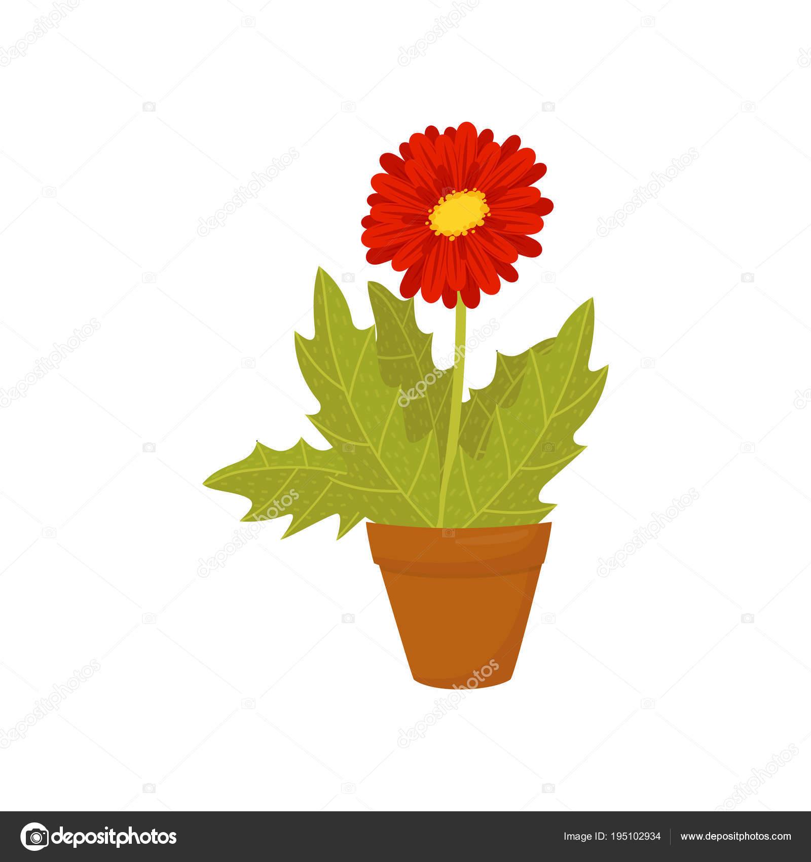 Gerbera Daisy Avec Fleur Fleur Rouge Et Feuilles Vertes Icone Plate