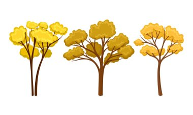 Autumn Trees with Lush Foliage Isolated on White Background Vector Set