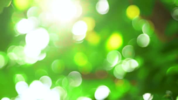 nature green bokeh background. Sunlight shining through the leaves of trees, natural blurred background, abstract nature summer
