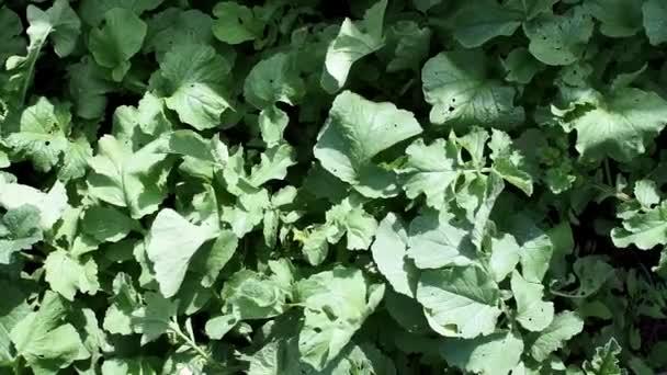 reteklevelek, természetes háttér. ökológiai zöldségek termesztése.
