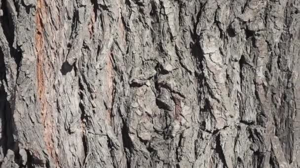 Macro bark of a tree. Clear place for your text. Empty space. texture of an old tree
