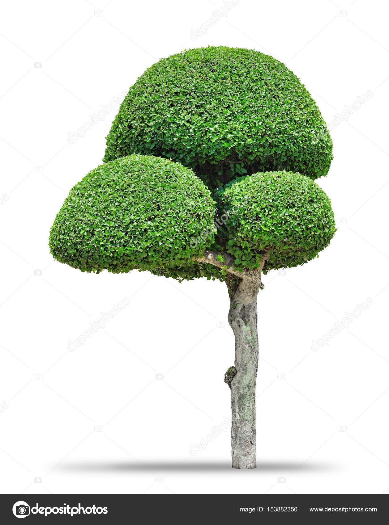 fantaisie en forme d'arbre décoratif — photographie crprin © #153882350