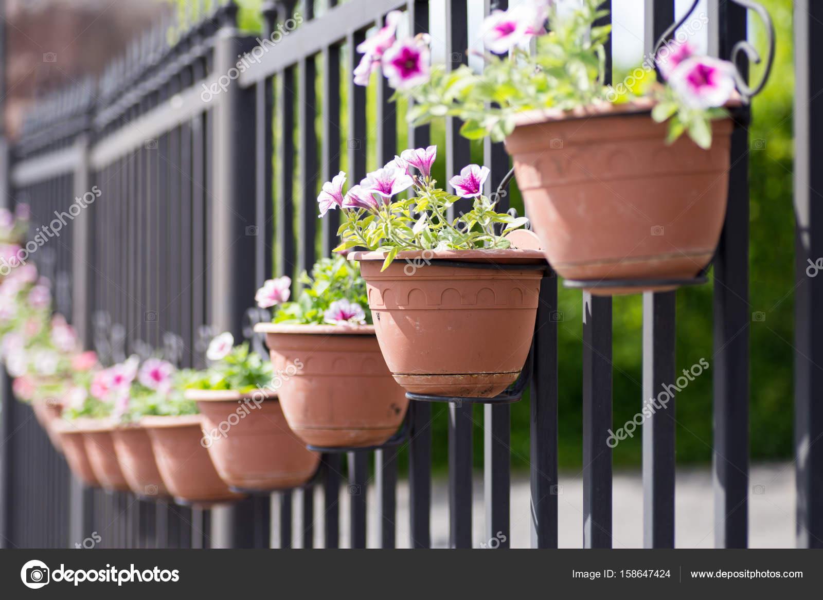 Ceramic Flowerpots On A Metal Fence Outside Zdjęcie