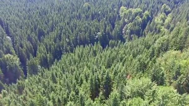 nádherný les. pohled z dron