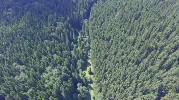 krásný les na Ukrajině. Letecký pohled