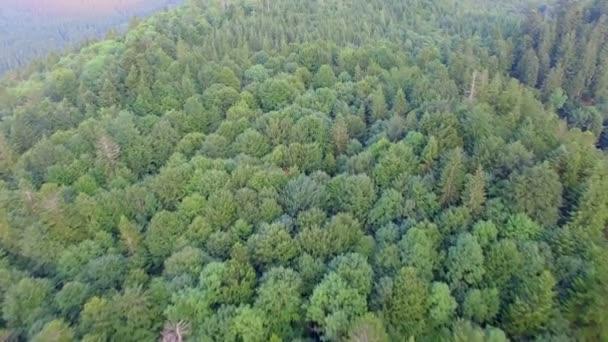 Les na vrchol hory. Letecký pohled