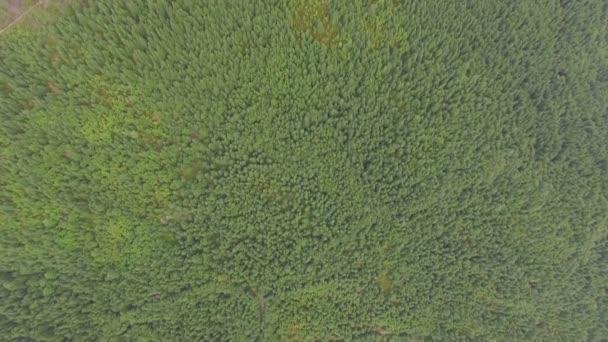 velký zelený borový les. Letecký pohled
