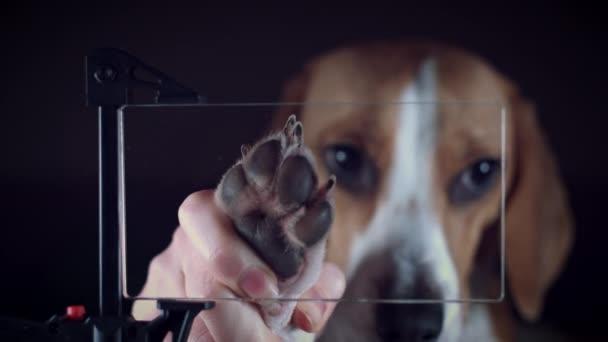 4 k átlátszó jövőbeli intelligens eszköz, kutya, így mancs Print