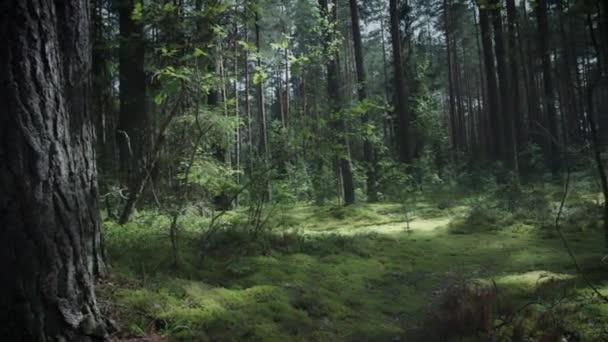4 k Dolly lövés-erdő