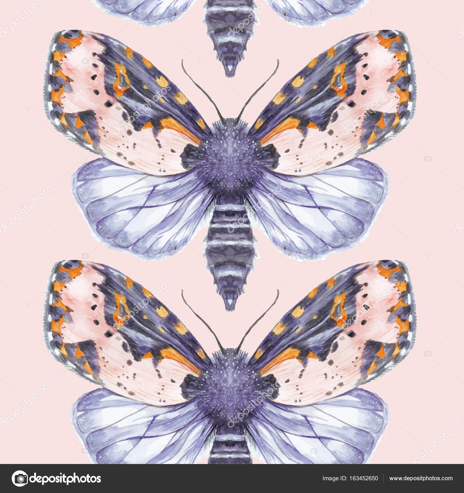 Pintar Dibujo Acuarela shaggy mariposa osito fondo, brillante para ...
