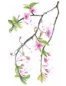 Photo Watercolor drawing of cherry cherry blossoms cherry blossoms, pink flowers, gentle tones, on the theme of spring, mothers day, March 8, birthday with birds, tits and oriol for decor and design of pos