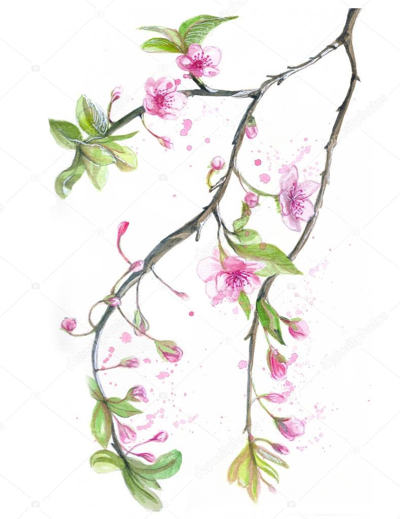 Watercolor drawing of cherry cherry blossoms cherry blossoms, pink flowers, gentle tones, on the theme of spring, mother's day, March 8, birthday with birds, tits and oriol for decor and design of pos