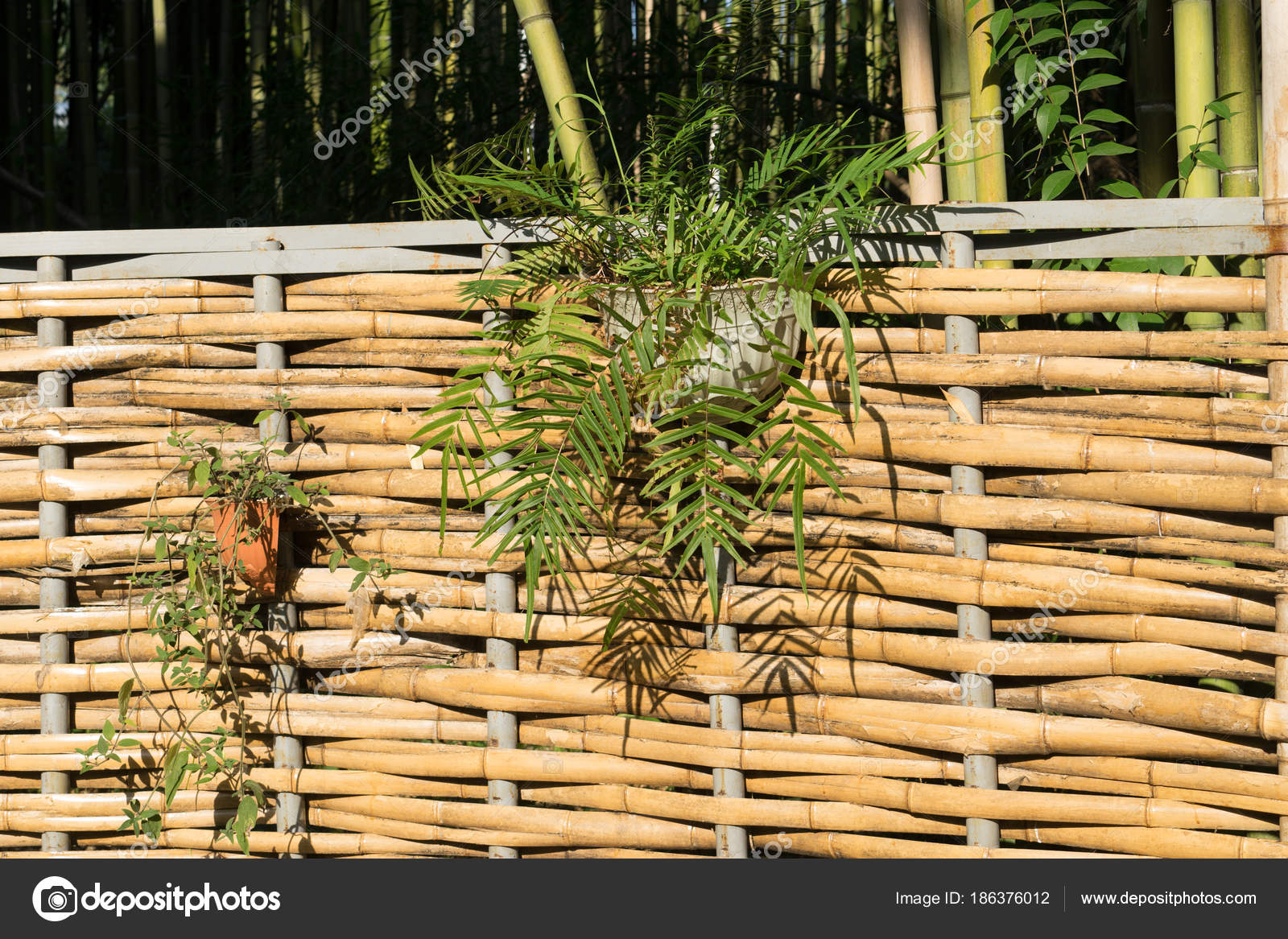 Fence Bamboo Weave Hanging Baskets Flowers Stock Photo C Vvicca 186376012