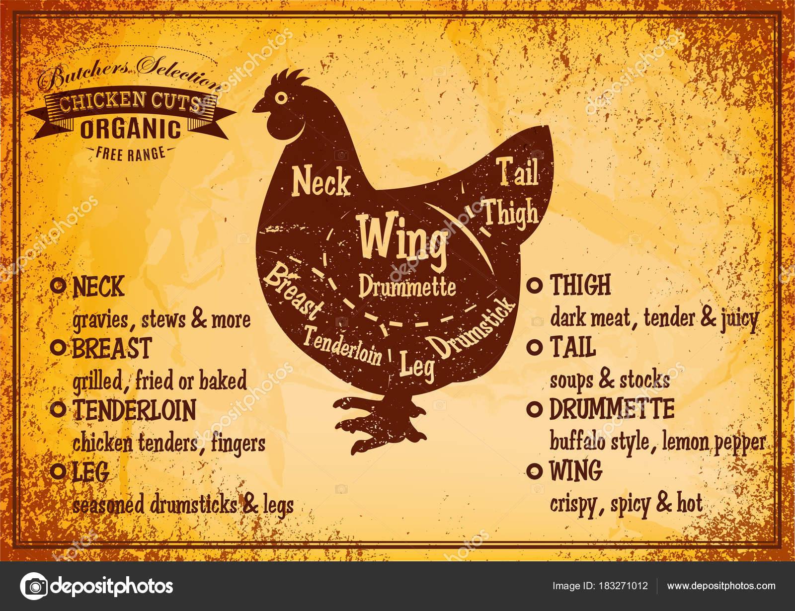 Afiche de color vectorial con esquema detallado corte de pollo ...