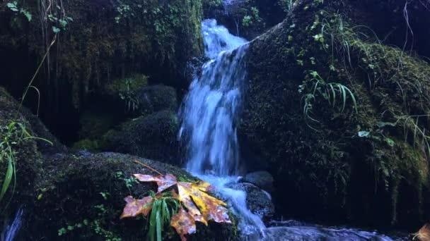 Barvy podzimu Oregon pozadí vodopád